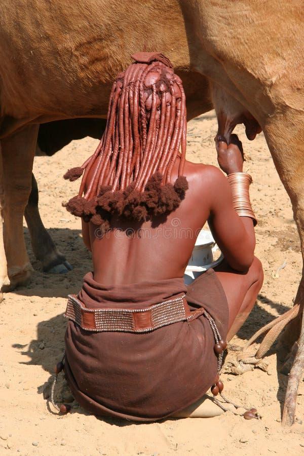 De vrouw van Himba melkt een koe royalty-vrije stock foto