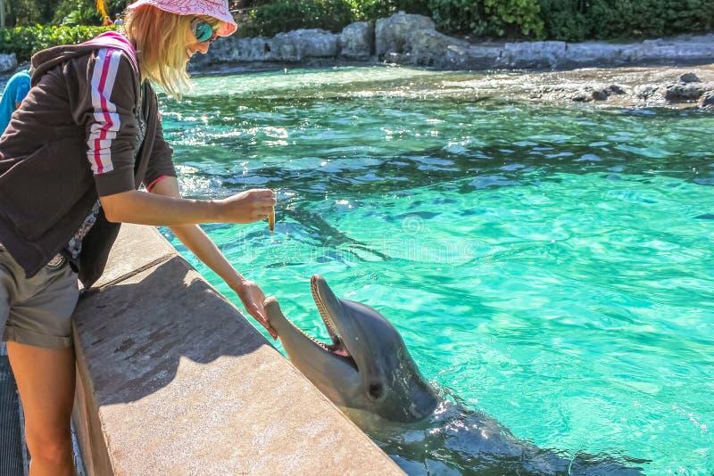 De vrouw voedt dolfijn stock foto's