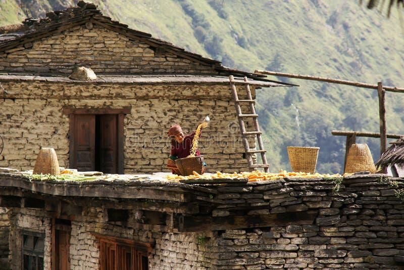 De vrouw zift graan op dak royalty-vrije stock afbeeldingen