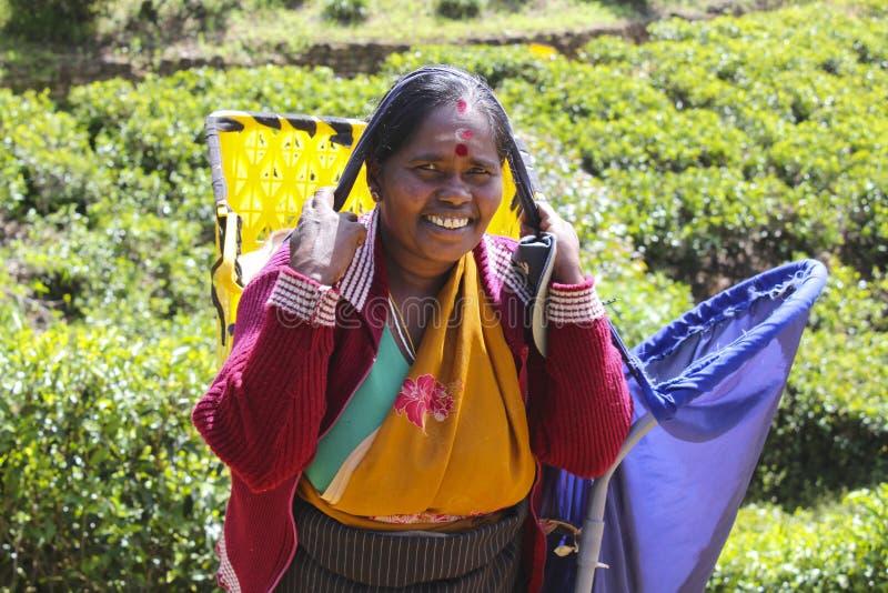 De vrouwelijke Arbeider van de Theeaanplanting, Sri Lanka stock fotografie