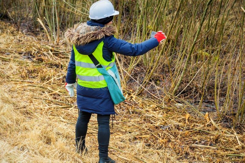 De vrouwelijke bosbouwinspecteur neemt beelden op smartphone dichtbij felling struiken stock foto