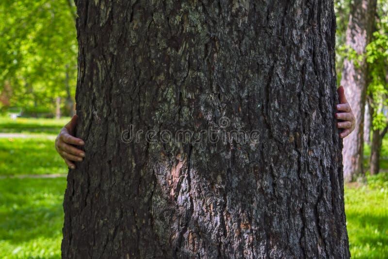 De vrouwelijke handen koesteren een dikke boomboomstam Close-up van handen die boomboomstam omhelzen royalty-vrije stock afbeeldingen