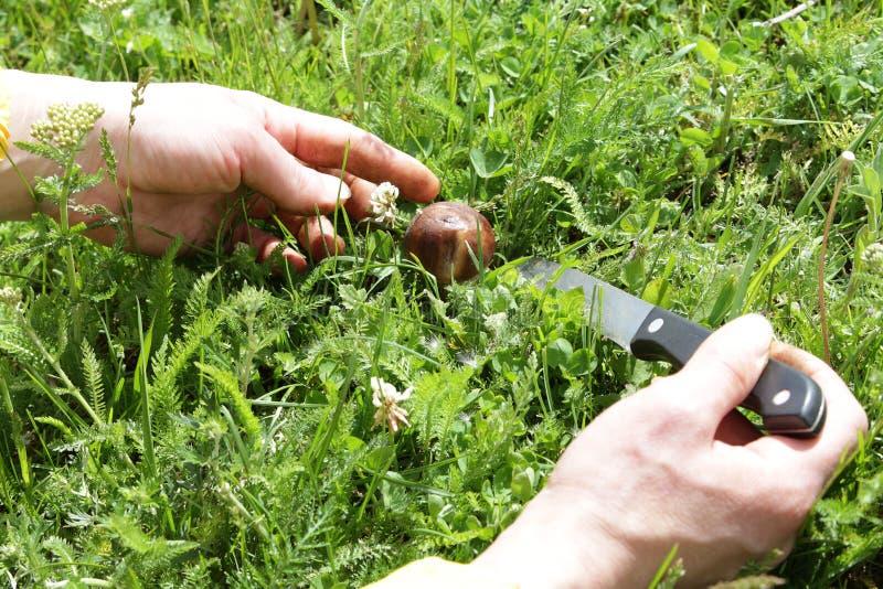De vrouwelijke handen snijden de paddestoelen met een mes royalty-vrije stock afbeeldingen