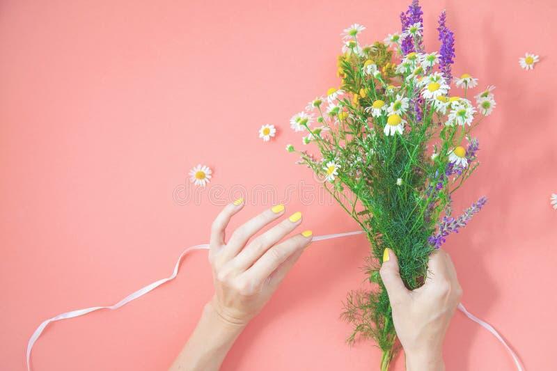 De vrouwelijke handen verzamelen een boeket van wildflowers op een roze ruimte Hoogste mening van het achtergrond Helende kruiden royalty-vrije stock foto
