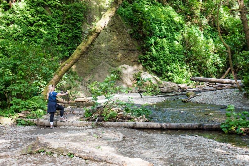 De vrouwelijke wandelaar bereidt een rivierlogboek voor die langs de Fern Canyon-stijging in Californische sequoia Nationaal Park royalty-vrije stock foto