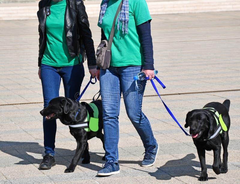 De vrouwen lopen de honden op de straat royalty-vrije stock afbeelding
