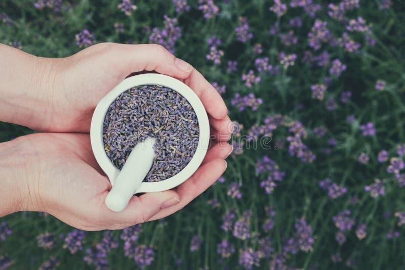 De vrouwenholding in haar handen een mortier van lavendel bloeit op lavendelgebied Hoogste mening royalty-vrije stock fotografie