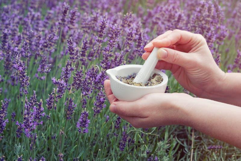 De vrouwenholding in haar handen een mortier van lavendel bloeit op Lavendelgebied stock afbeeldingen