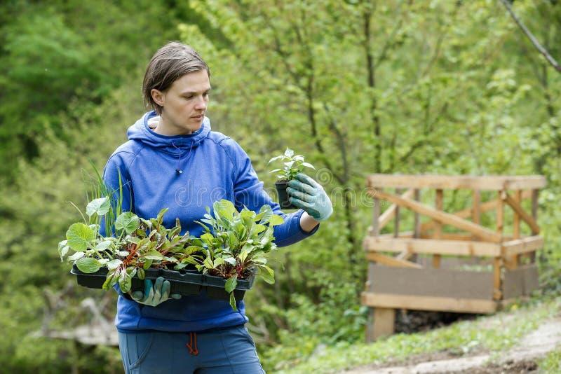 De vrouwentuinman met zaailingen trof voor het planten voorbereidingen royalty-vrije stock foto's