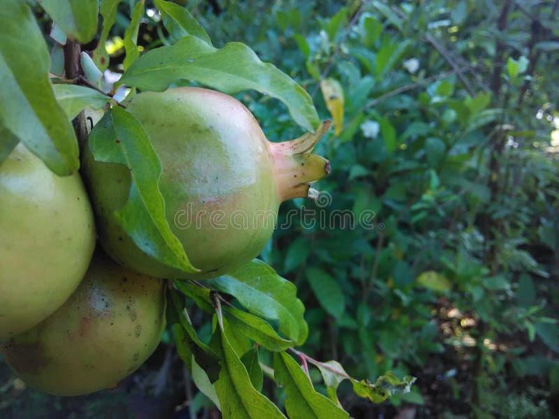 De vruchten stock foto's
