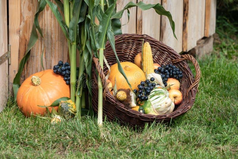De vruchten en de groenten van de herfst royalty-vrije stock foto's