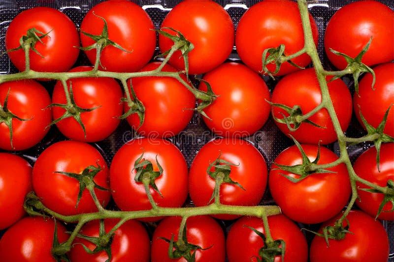 De Vruchten van de tomaat stock afbeeldingen