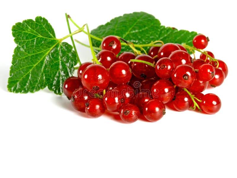 De vruchten van de zomer: Redcurrant stock afbeeldingen