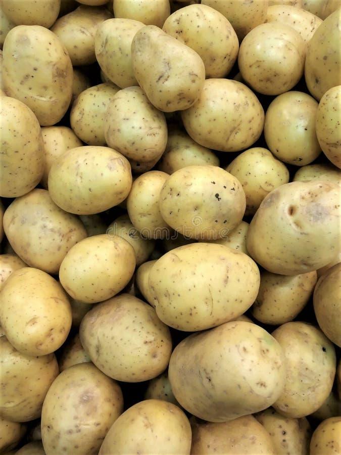 de vruchten van verse groentenaardappels van yellowy-bruine kleur zijn nuttig aan de havermoutpapspaanders van de gezondheidspure stock afbeelding