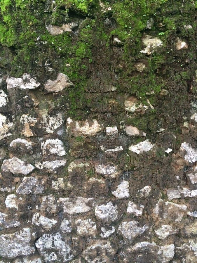 De vuile Bemoste Muur van de Steenrots stock fotografie