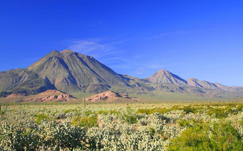 De vulkanen van Virgens in Baja stock afbeeldingen