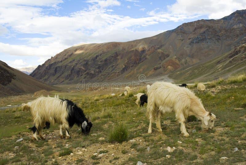 De waaier van Himalayagebergte stock foto's