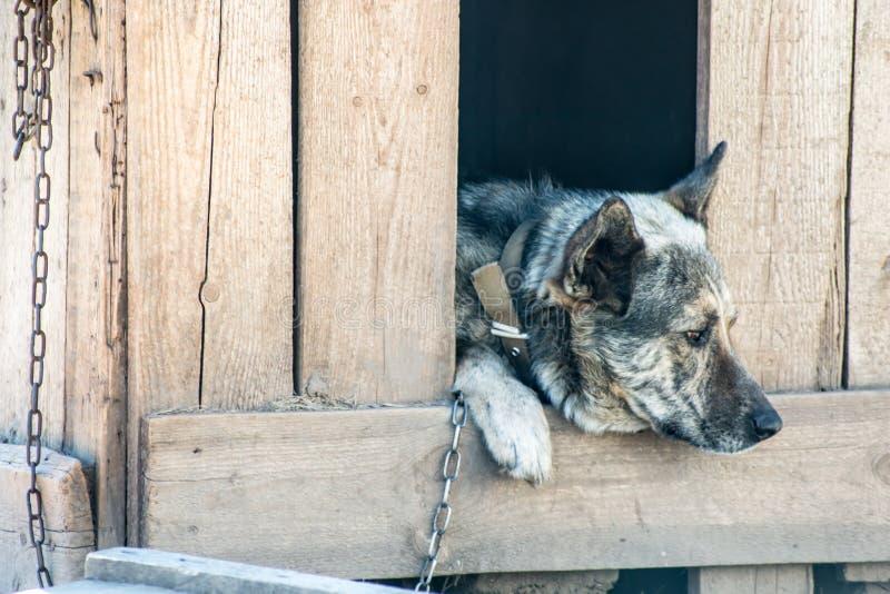 De wachthond zit in een kennelketting en is droevig royalty-vrije stock afbeelding