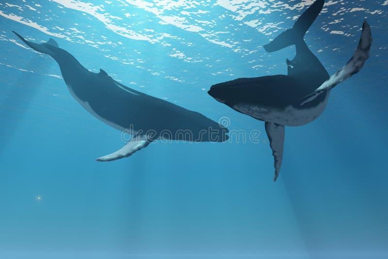 De walvis is benieuwd royalty-vrije illustratie