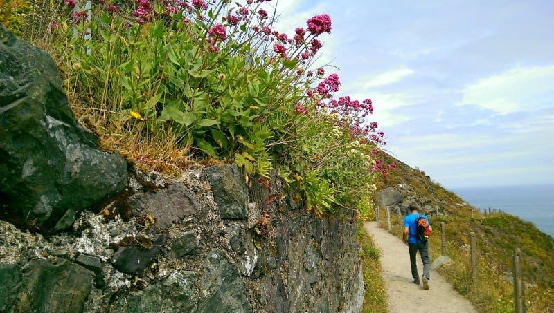 De wandeling van Bray aan Greystones Cliff Walk stock fotografie