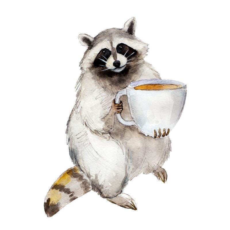 De wasbeer van de waterverfillustratie met koffiemok, dierlijk die karakter op witte achtergrond wordt geïsoleerd vector illustratie