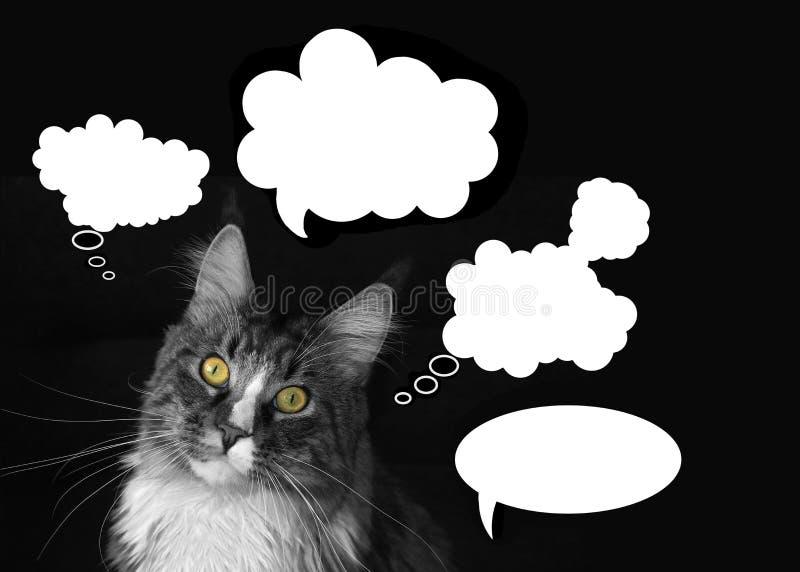 de wasbeerkat van Maine met wolken van gedachten op een zwarte achtergrond stock fotografie
