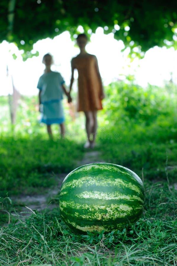 De watermeloen is op de sleep royalty-vrije stock foto