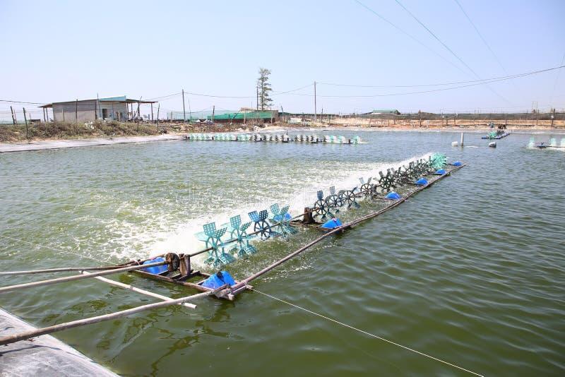 De waterpropellers worden om zuurstof te creëren om witte garnalen op plastic zilverachtige zandgrond te kweken geproduceerd met  royalty-vrije stock afbeelding
