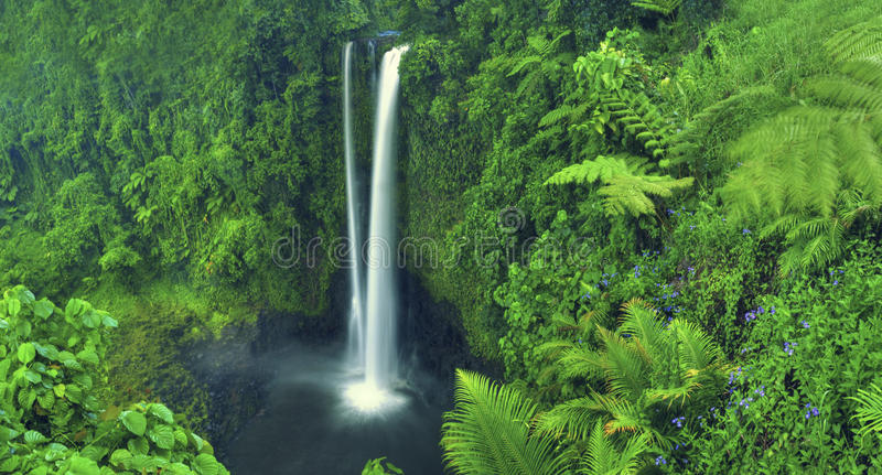 De Waterval Forest Concept van Scenics van de watervalaard stock foto's