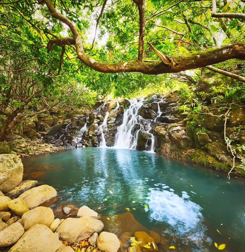 De waterval van cascadevacoas mauritius stock afbeeldingen