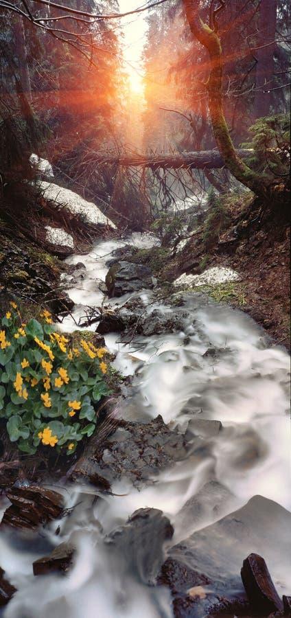 De waterval van de berg stock foto's