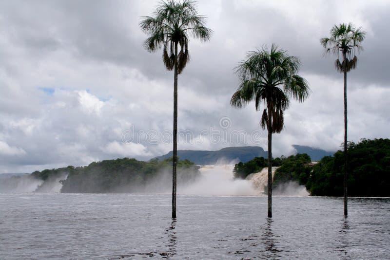 De watervallen omringden een meer met drie palmen stock foto's