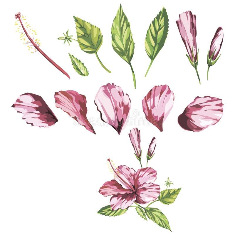 De waterverf isoleerde illustratie van een roze hibiscus, tropische bloemsamenstelling op een witte achtergrond stock illustratie