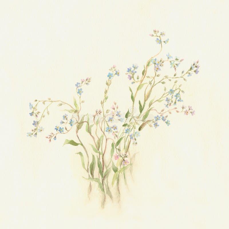 De waterverf van vergeet-mij-nietjes het schilderen royalty-vrije illustratie