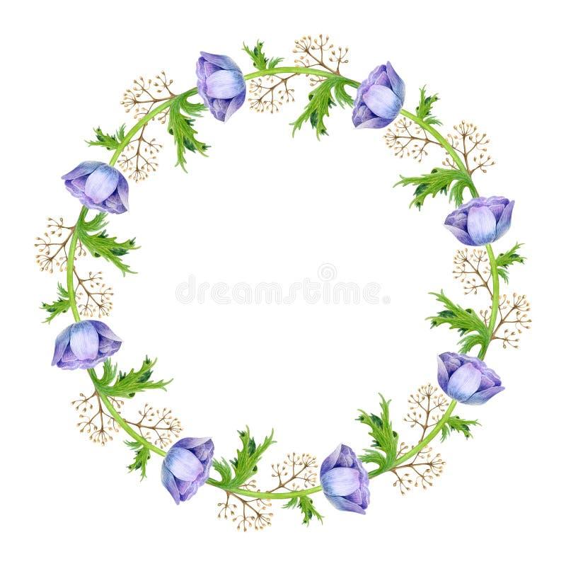 De waterverfanemoon bloeit kader De lentetakken met anemoonbloemen en veren royalty-vrije illustratie