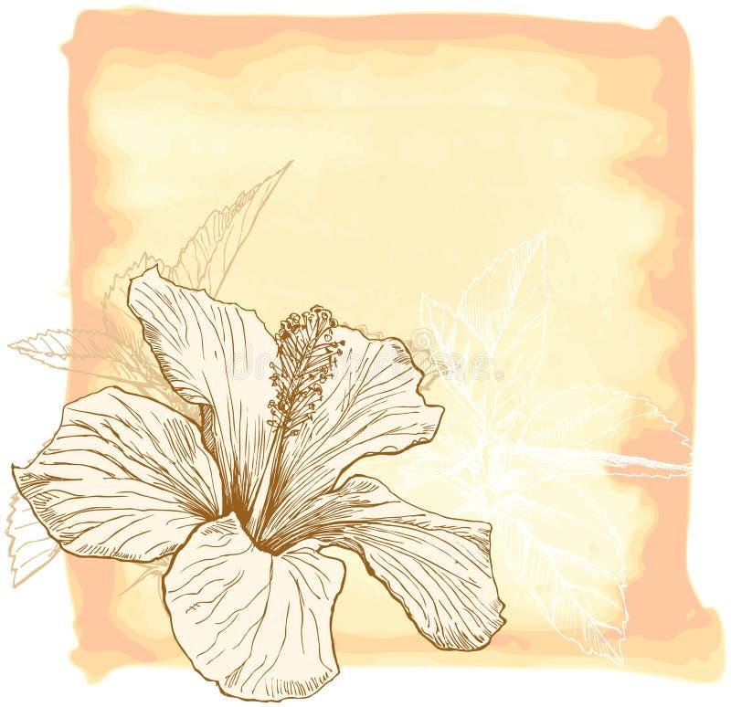 De waterverfbloem van de hibiscus stock illustratie