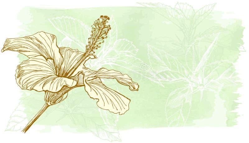 De waterverfbloem van de hibiscus vector illustratie