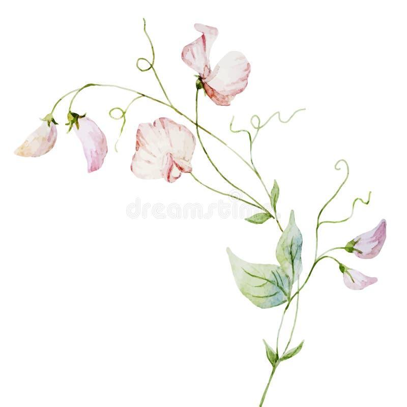 De waterverfbloemen van Nice vector illustratie