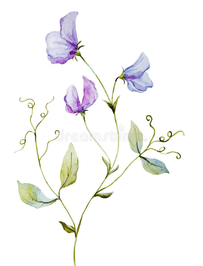 De waterverfbloemen van Nice stock illustratie
