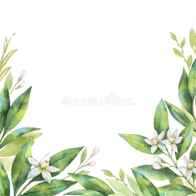De waterverfhand schilderde kaart van de takken en bloeit fruitsinaasappel die op witte achtergrond wordt geïsoleerd vector illustratie