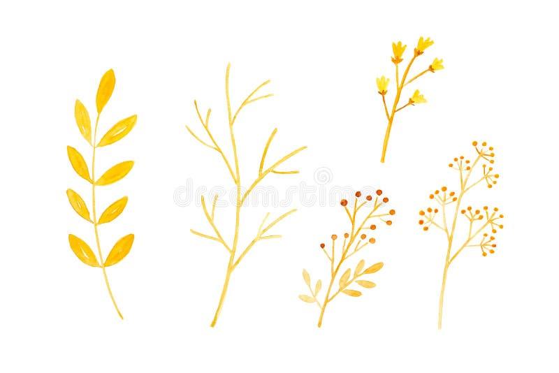 De waterverfillustratie, Reeks van de daling van de handtekening, de herfst bloeit en gaat in waterverfstijl op witte achtergrond royalty-vrije illustratie