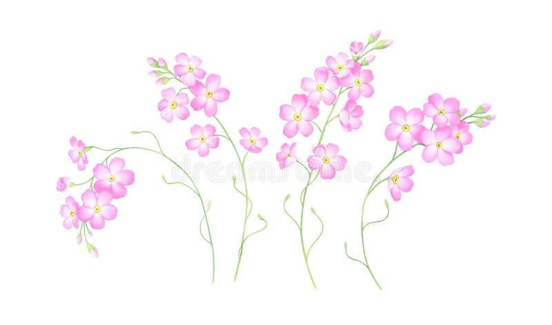 De waterverfreeks van roze vergeet me niet bloemen op witte achtergrond worden geïsoleerd die stock illustratie