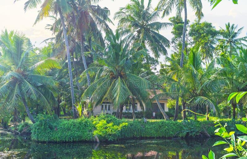 De weelderige palmen bij het Kanaal van Hamilton ` s, Sri Lanka stock afbeelding