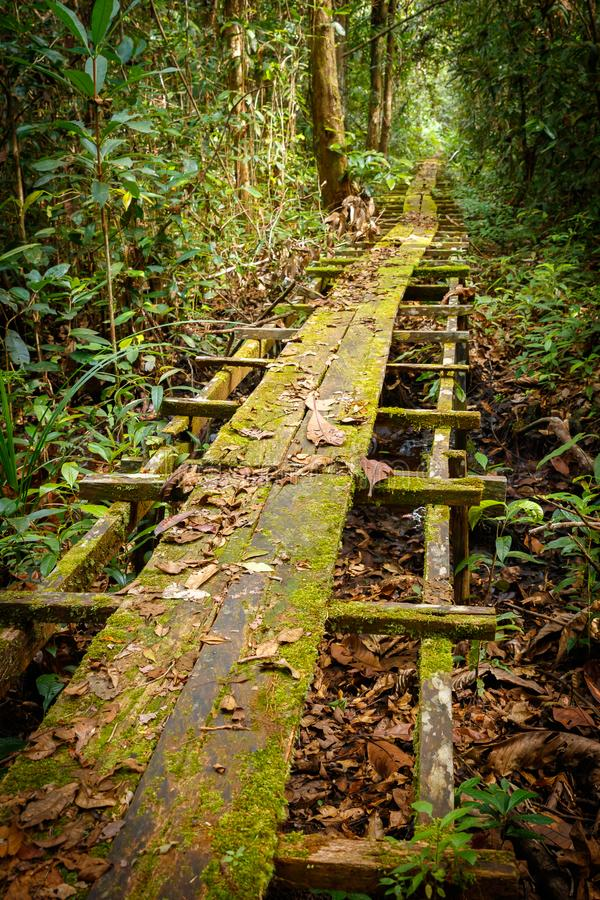 De weg aan de Bornean-bossen stock foto's
