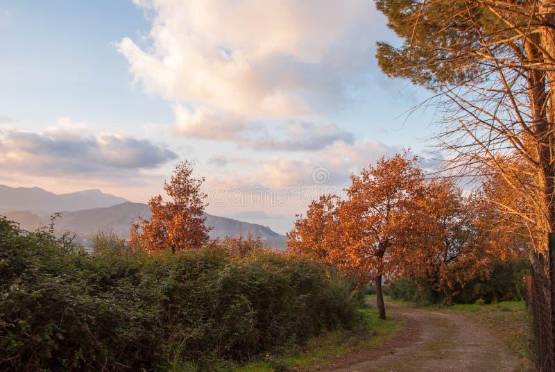 De weg aan het park in de herfst royalty-vrije stock foto's