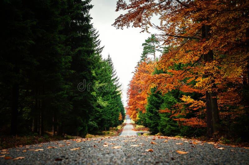 De weg in de herfstbos met gevallen doorbladert royalty-vrije stock fotografie