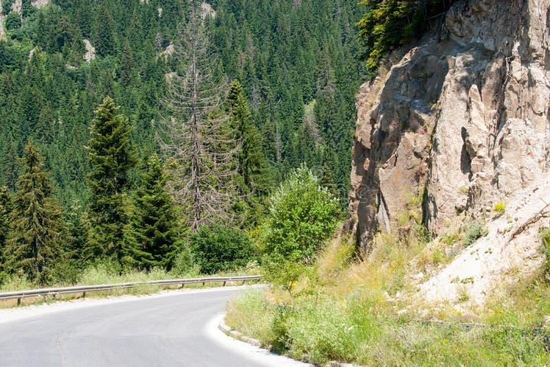 De weg in de Rhodopes-Bergen in Bulgarije royalty-vrije stock foto's