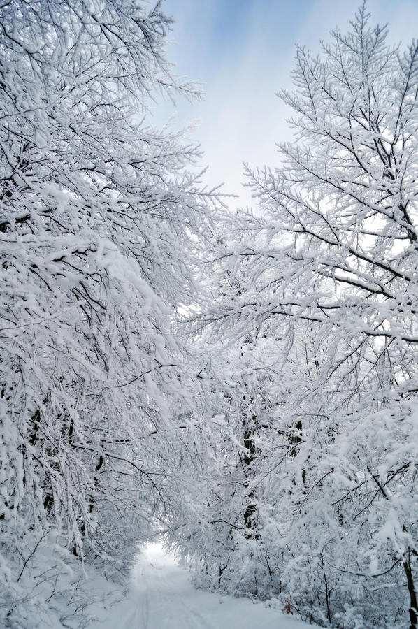 De weg die van de winter tussen bevroren bomen loopt stock afbeeldingen