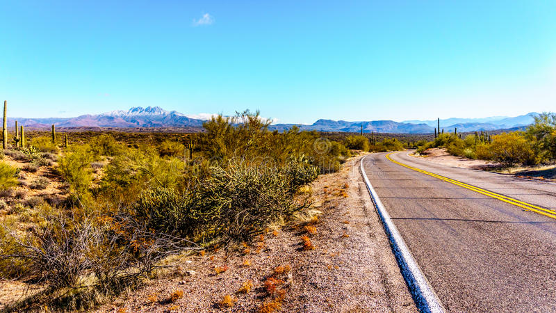 De Weg die van het noordenbush door semi-desert van Vier Piekenwildernis winden in Arizona royalty-vrije stock afbeeldingen