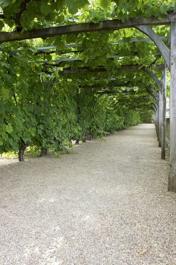 De weg door wijnstok behandelde pergola bij chateau, villandry DE, de Loire, vallei, Frankrijk stock afbeeldingen